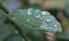 låter vara waterdrops Fotografering för Bildbyråer