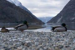 Lærdal Fjord, Norway Stock Images