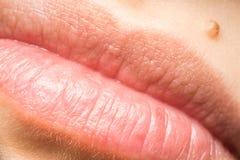 Lèvres naturelles de femme macro Photos stock