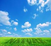 Légende de nature sur le cordon vert Photographie stock libre de droits