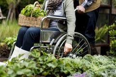 Légume adulte supérieur de cueillette de couples de jardin d'arrière-cour Images libres de droits