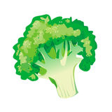 Légume de brocoli illustration libre de droits