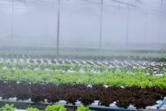 Légume de culture hydroponique photo libre de droits