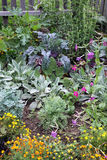 Légume de mélange et lit de jardin de fleurs Image stock