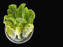 Légume de vert de Cos Lettuce photographie stock libre de droits