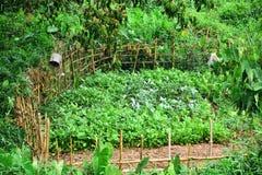 Légume et agriculture avec la barrière en bambou Images libres de droits