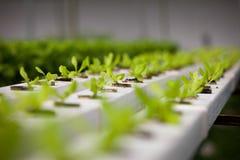 Légume frais dans la ferme Images stock