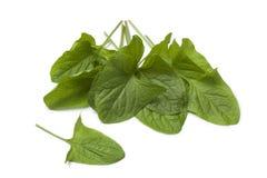 Légume frais de Bon-Roi-Henry photographie stock libre de droits
