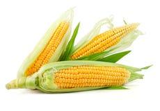 Légume frais de maïs avec les lames vertes images stock