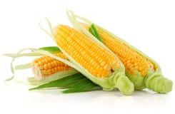 Légume frais de maïs avec les lames vertes photographie stock libre de droits