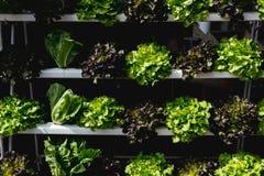 Légume organique sur l'étagère photos libres de droits