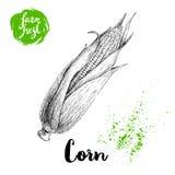 Légume tiré par la main de maïs de style de croquis Épi de maïs avec des feuilles et des graines Illustration fraîche de vecteur  Images stock