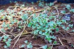 Légume vert photographie stock libre de droits