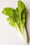 Légume vert photo libre de droits