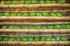 Légumes colorés hydrauliques Images stock