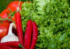 Légumes d'été Images stock
