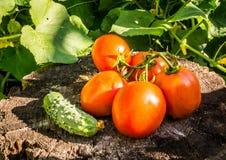 Légumes d'été photos libres de droits