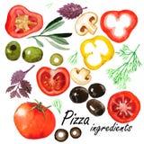 Légumes d'aquarelle réglés Image libre de droits