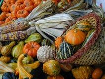 Légumes d'automne de couleur Photo libre de droits
