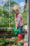 Légumes de arrosage mignons de petit garçon avec la boîte d'arrosage Jardin greenhouse Photo libre de droits