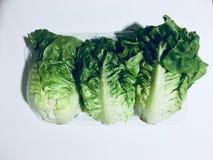 Légumes de coeur de laitues de laitue Photo libre de droits