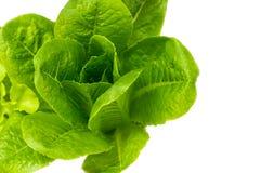 Légumes de Cos photographie stock