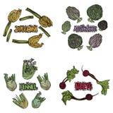 Légumes de couleur réglés Images libres de droits