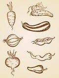 Légumes de cru réglés illustration stock