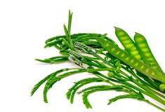 Légumes de Katin d'isolement Image libre de droits