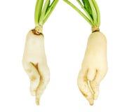 légumes de panais blancs photos libres de droits