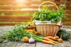 Légumes de récolte avec des herbes et des épices image stock