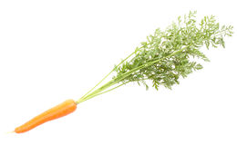 Légumes de raccord en caoutchouc avec des lames Image libre de droits