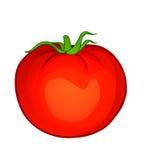 Légumes de vecteur : carotte Photos libres de droits