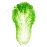 Légumes de vecteur d'aquarelle réglés : Chou de Napa Images stock
