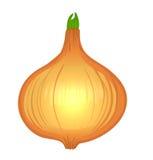 Légumes de vecteur d'aquarelle réglés : oignon Photographie stock