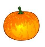 Légumes de vecteur : potiron Image libre de droits