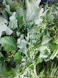 Légumes de verts images stock