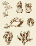 Légumes de vintage Photos stock