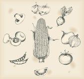 Légumes dessinant les objets d'isolement Images libres de droits