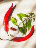 Légumes et insecte images libres de droits