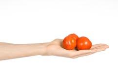 Légumes et thème de cuisson : la main de l'homme jugeant trois tomates mûres rouges d'isolement sur un fond blanc dans le studio Photographie stock libre de droits