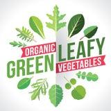 Légumes feuillus de verts Photographie stock