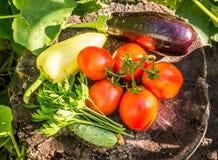 Légumes frais d'été photos stock