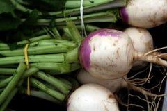 Légumes frais de jardin Images libres de droits