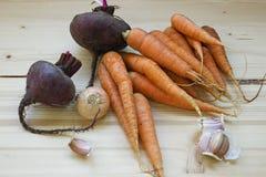 Légumes frais de récolte Images stock
