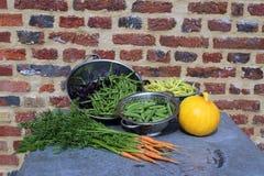 Légumes frais du jardin Photo libre de droits