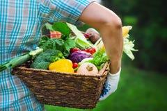 Légumes frais remplis de boîte en bois photos stock