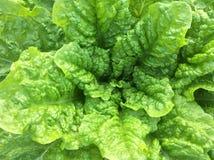 Légumes organiques Photo libre de droits