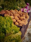 Légumes organiques au marché d'agriculteurs Photographie stock libre de droits