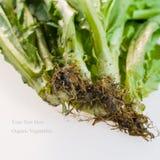 Légumes organiques avec la racine sale Image stock